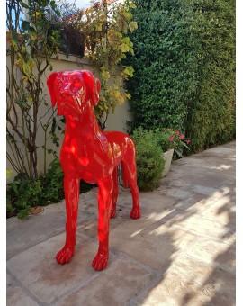 Dog Géant Drimmer  Rouge